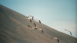 Flamingos over Laguna Verde
