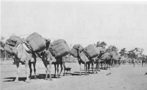 9_Camel_train_with_tolarno_wool_1914