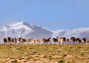 Altun-Mountains-InternationalHunting-Field