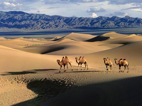 gobi-desert-mongolia-284sy1j