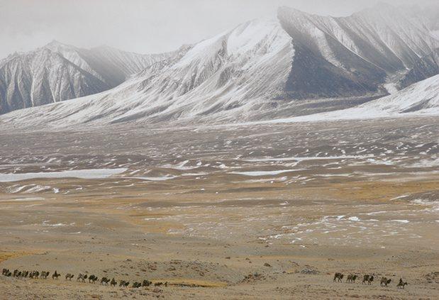 Kirgiz Caravan